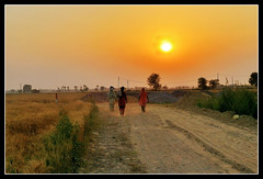 258 (ArvinderSP) Tags: sunset landscape wheat side country harvest feilds mygearandme mygearandmepremium mygearandmebronze mygearandmesilver ringexcellence dblringexcellence