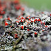 """lichen 2 • <a style=""""font-size:0.8em;"""" href=""""http://www.flickr.com/photos/124671209@N02/14027803080/"""" target=""""_blank"""">View on Flickr</a>"""
