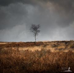 Lone Tree I (Greg Whitton Photography) Tags: cloud tree landscape mood district peak 11 lone