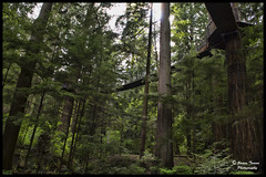 In The Treetops (James Tarver) Tags: wood trees wild summer tree green nature leaves pine forest landscape outdoors high stem scenery branch wildlife branches hill perspective evergreen valley twig trunk tall wilderness eco treetop