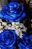 3 alegres rosas azules (Edwin.1997) Tags: blue roses de y para negro una alemania todo tu rosas ramo fondo regalo castillo carta edwin nada malo amazonas azules amada salazar verdecora mesnada acompañalo