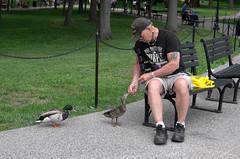 Feed the Ducks (Bsivad) Tags: dc memorial ducks vietnam feed rollingthunder