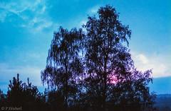 "Test Lomo Purple XP 100-400 mit Minolta 7000 • <a style=""font-size:0.8em;"" href=""http://www.flickr.com/photos/58574596@N06/14359109026/"" target=""_blank"">View on Flickr</a>"
