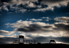 Lone Horse and Sky by Geoffrey Baker (AccessDNR) Tags: 2016 photocontest fall autumn wildlife horse hill horsefarm patapscovalley state park oella silhouette