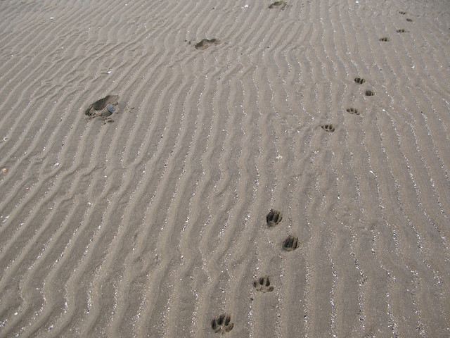 paw prints in the sand | Emma Lamb
