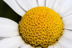 un fiore, mille fiori