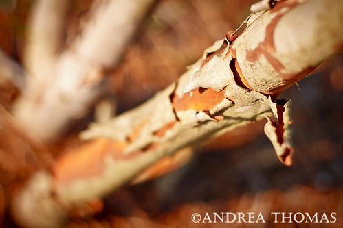 Week 26: Cinnamon