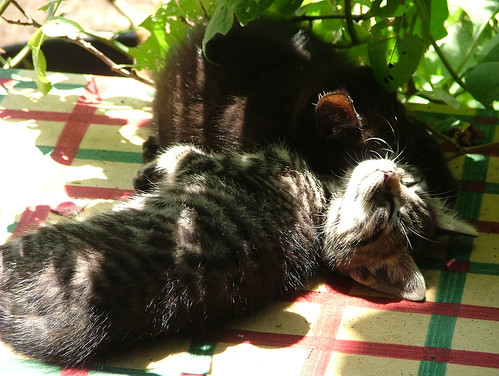 sunbathing or sleeping?