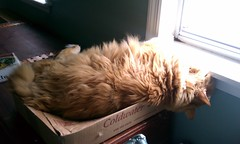 Jasper sleeping on his box
