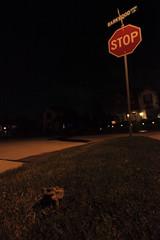 frog and stop sign (VisualUniverse) Tags: frog stopsign urbanwildlife suburbanwildlife