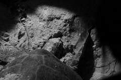 green turtle2