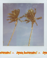 Palm Trees (PolaWalk) Tags: blue day2 film analog polaroid coconut philippines palmtrees palmtree analogue slr680 palawan polaroidcamera roidweek roidweek2014