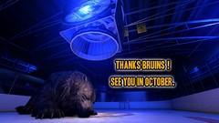 Bruins Season is Over.
