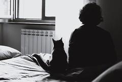 Morning (paola photos) Tags: morning friends light people white black animal cat persona friend shadows amici gatto bianco nero animale luce mattina sveglia amico