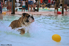 Bulldog (Sobrino de Murphy) Tags: dogs cannes perros hunde chiens