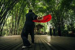 (julien_f) Tags: chengdu china park wangjianglou kung fu tai qi bamboo wide angle green forest