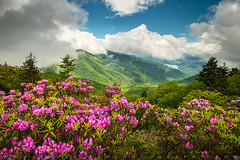 Asheville North Carolina Blue Ridge Parkway Spring Scenic Landscape (Dave Allen Photography) Tags: asheville blueridgeparkway northcarolina nc spring flowers scenic landscape pink outdoors nature mountains appalachians appalachianmountains easternus summer westernnc outdoorphotographer