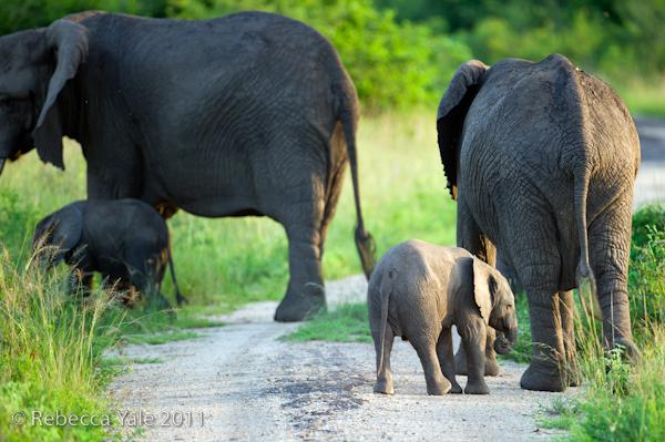 RYALE_Rwanda_Uganda_Safari-282