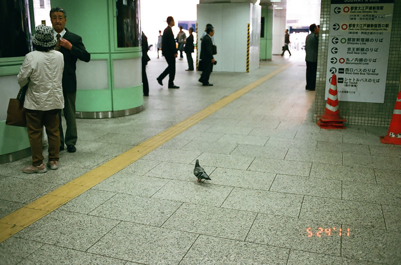 PigeonShinjukuStation (8 of 13)