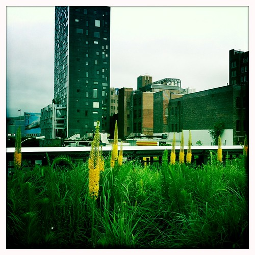 Scene from The High Line