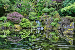 Heavenly Falls at Portland Japanese Garden - HDR (David Gn Photography) Tags: flowers trees plants motion reflection nature public water oregon garden season portland asian japanese design waterfall moss spring maple movement pond rocks long exposure parks tranquility filter zen rhododendron swirl ferns portlandjapanesegarden hdr 3xp nd8 heavenlyfalls canoneos7d sigma2470mmf28ifexdghsm sigma50th