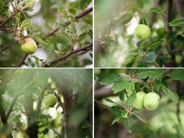06-27-apples1
