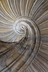 Fibonaccis Dream