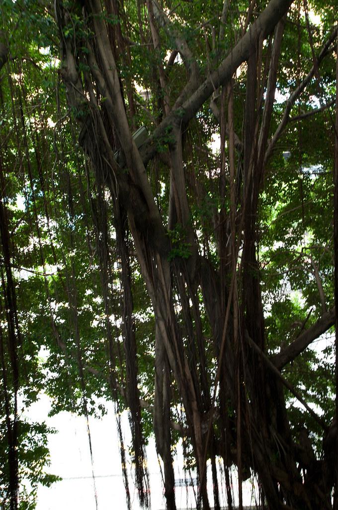 藏著許多盆栽的走廊...(Tamron 17-50 A16) 44P