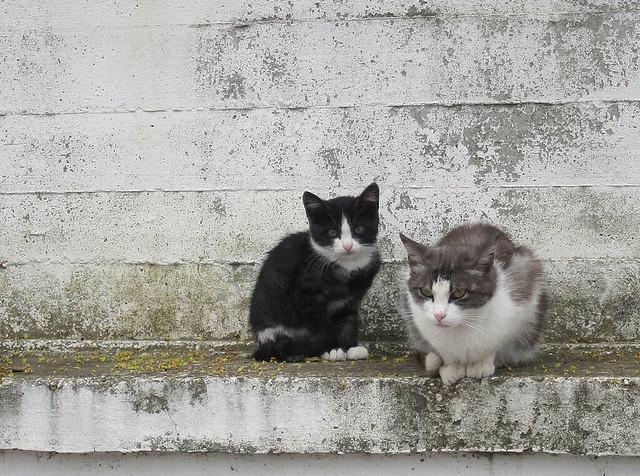 feral kitties