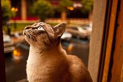Da de tormenta (Javier Del Pozo) Tags: street storm color window rain cat canon ventana calle lluvia kitten kitty gato m42 tormenta hoya ratn 500d canon500d m42adapter vintagelens focalfija objetivomanual objetivosantiguos javierdelpozo