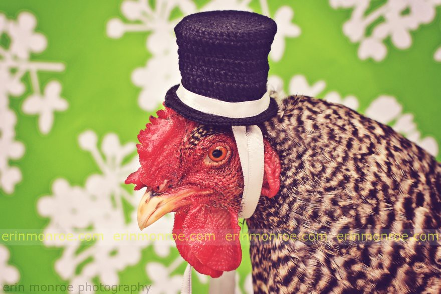 tophat chicken 2