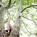 Tree-climbing on Montalto