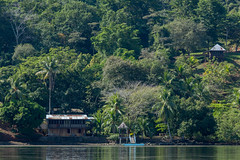 20160130-5C4A0092 (Take-it-easy59) Tags: 2016 30012016 corcovado corcovadoparquenacional costarica npcorcovado nature naturephotography tropicalrainforest tropischregenwoud winter