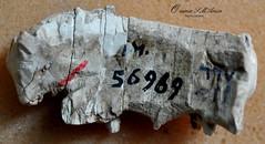 Ivory Bull from Nimrud, Mesopotamia, Iraq (Sumer and Akkad!) Tags: mesopotamia iraq nimrud ivory nimrudivories bull assyria neoassyrianperiod max mallowan maxmallowan sulaymaniyahmuseum kurdistan sulaymaniyah kalhu calah fort shalmaneser iraqmuseum backside
