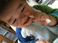 新しい歯ブラシで歯磨きするとらちゃん (6/18)