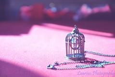 Deixa ele voar (Laarices Fofagrafia) Tags: passarinho gaiola alicedisse