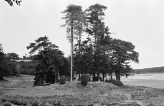 Trees ([Scott]) Tags: castle film wales fomapan ilfordid11 nikonfm2n film:iso=400 fomafomapan developer:brand=ilford film:brand=foma film:name=fomafomapan400 developer:name=ilfordid11 filmdev:recipe=6784