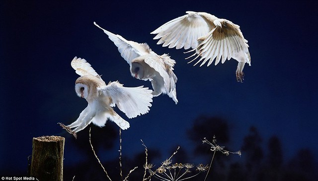 Amazing photos capture split-second movements of animals leaping and flying... in a single frame  3