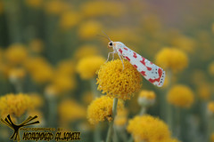 butterfly (MoHammaD Al-jameel) Tags: