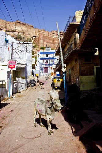 Jodhpur street ps