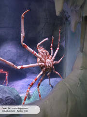London Aquarium Ice Adventure spider crab (ravenhill design) Tags: design immersive interactive bas londonaquarium happycampers spidercrab ravenhill researchstation gentoopenguins britishantarcticsurvey iceadventure crawlthrough ravenhilldesign