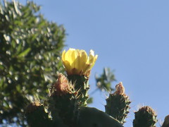CIMG6393 (kazadmanesh) Tags: و بهار خشکسالی