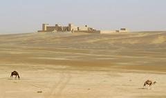 morocco (gerben more) Tags: marokko morocco sand sahara camel camels desert building kasbah merzouga