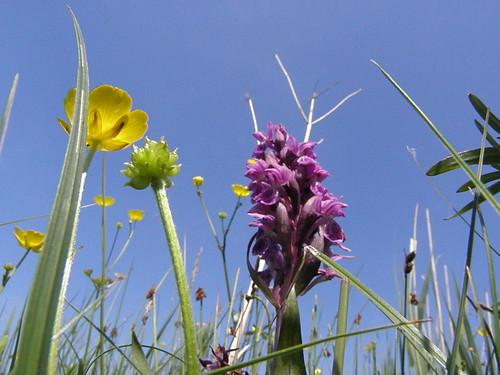 blomster  på Stejlebanken