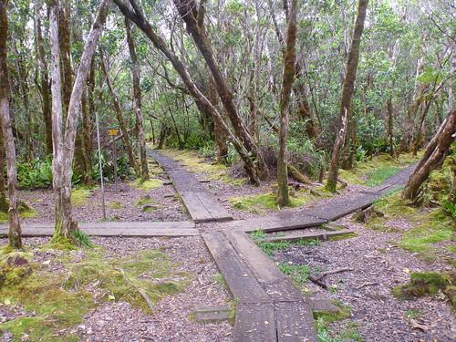 Pihea and Alakai Swamp Trail Crossroads
