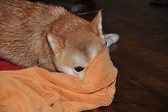 Towel!