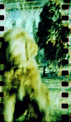 dash 3 (monkey_and_alien) Tags: dog pet blur film bulb 35mm garden iso100 outdoor crossprocess sunny happyaccidents sprockets paintinglike holga120gcfn fujiprovia