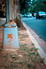 (Plantains & Kimchi) Tags: road street flower art lamp by dc washington painted dcist