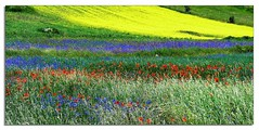 Colorful Nature (ingroar) Tags: flowers blue red italy white detail green nature colors field yellow colorful italia meadow bloom umbria palette papaveri tavolozza colorspot fiordalisi ginestre castellucciodinorcia ingroar assaggiodifioritura