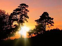 Pastel Dawn (The Haymaker) Tags: trees sun sunrise dawn oltusfotos panoramafotogrfico
